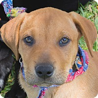Adopt A Pet :: Mister - Wharton, TX