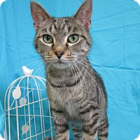 Adopt A Pet :: DESIREE - New Cumberland, WV