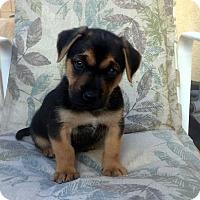 Adopt A Pet :: Chevy - Downey, CA