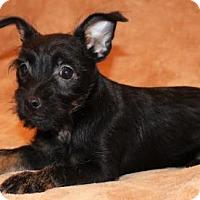 Adopt A Pet :: Matt - Modesto, CA
