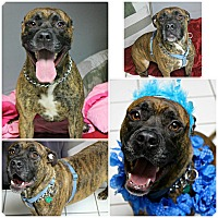 Adopt A Pet :: Larkin - Forked River, NJ