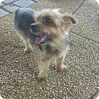 Adopt A Pet :: Maestro - Uxbridge, MA