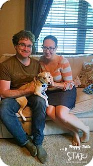 Corgi/Chihuahua Mix Dog for adoption in Northville, Michigan - zBambi - ADOPTED