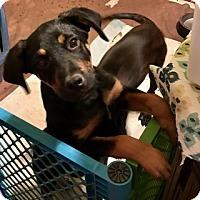 Adopt A Pet :: Emmett - chicago, IL