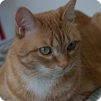 Adopt A Pet :: Leroy Tremont - Martinsville, IN