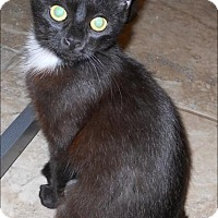 Adopt A Pet :: Pearl - San Antonio, TX