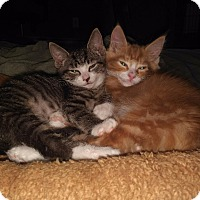 Adopt A Pet :: Roxy (F) & OJ (M) - Whitehall, PA