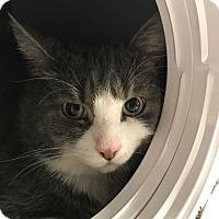 Adopt A Pet :: Toula - Toronto, ON