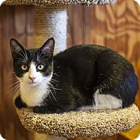 Adopt A Pet :: Buddy - St Helena, CA