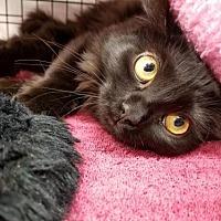 Adopt A Pet :: Ren - Albuquerque, NM