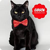Adopt A Pet :: Gibson - Wyandotte, MI