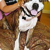 Adopt A Pet :: Maynard - Gilbert, AZ