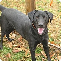 Adopt A Pet :: Gunner - PENDING, in Maine - kennebunkport, ME