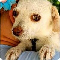 Adopt A Pet :: Birdie - Mission Viejo, CA