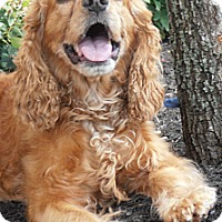 Adopt A Pet :: Xuxa - Sugarland, TX