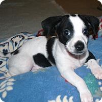 Adopt A Pet :: Hansel - Marietta, GA