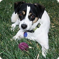 Adopt A Pet :: Mikey - Yorba Linda, CA