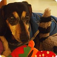Adopt A Pet :: Hope - Prole, IA
