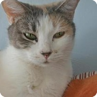 Calico Cat for adoption in Sebastian, Florida - Callie