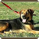 Adopt A Pet :: Kacy1/2 price adopt fee - Sherman, CT