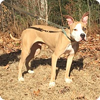 Adopt A Pet :: Freedent - Bloomfield, CT