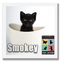 Adopt A Pet :: Smokey - Palm Desert, CA
