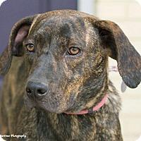 Adopt A Pet :: Gracie - PORTLAND, ME