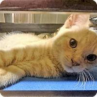 Adopt A Pet :: Apricat - Bruce Township, MI