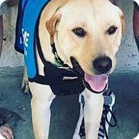 Adopt A Pet :: Cove - Midlothian, VA