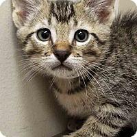 Adopt A Pet :: Larry - Hinsdale, IL
