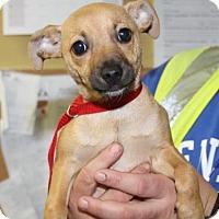 Adopt A Pet :: Watson - Milford, NJ