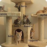 Adopt A Pet :: Garfield - Elkhorn, WI