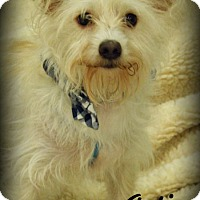 Adopt A Pet :: Artie - Anaheim Hills, CA