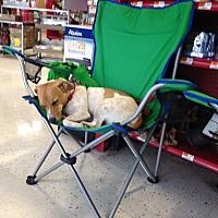 Adopt A Pet :: Memphis - Bridgewater, NJ