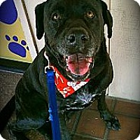 Adopt A Pet :: Finley - Cypress, CA