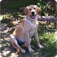 Adopt A Pet :: Sadie - Inglewood, CA