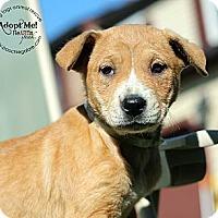 Adopt A Pet :: Annette - Marlton, NJ