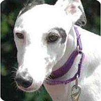 Adopt A Pet :: Ellie - Rancho Santa Margarita, CA