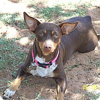 Adopt A Pet :: Rapunzel - Andrews, TX