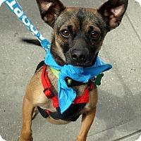 Adopt A Pet :: Baxter - Baton Rouge, LA