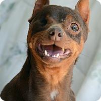Adopt A Pet :: Moxie - Acton, CA