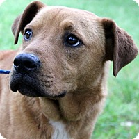 Adopt A Pet :: Edmond Celebrate Home Dog  Lower Fee - Yardley, PA