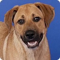 Adopt A Pet :: Sam - Chicago, IL