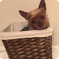 Adopt A Pet :: Finley - Los Angeles, CA
