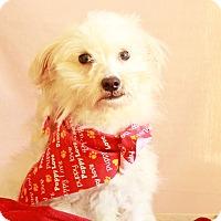 Adopt A Pet :: Hendrick - Waldorf, MD