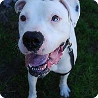Adopt A Pet :: Ralphie - Gainesville, FL