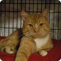Adopt A Pet :: Sampson - Winchendon, MA