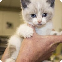 Adopt A Pet :: Tokyo - Chester Springs, PA