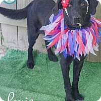 Adopt A Pet :: Lanie - Kimberton, PA