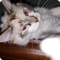 Adopt A Pet :: Macy - Albemarle, NC